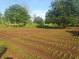 Lahan Tanah 8500m² di daerah Subang Jawa Barat