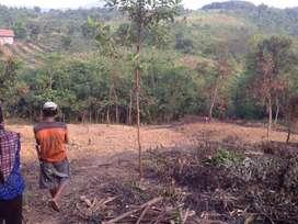 jual tanah cocok untuk kebun dan ternak