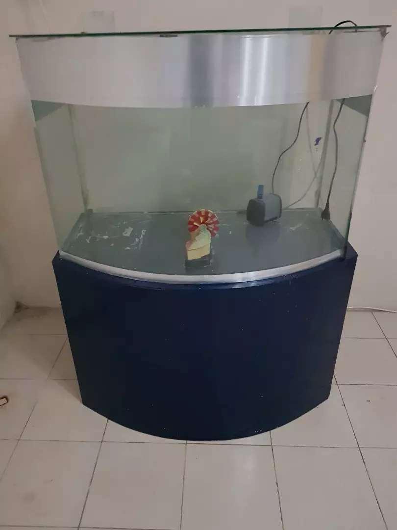 Aquarium kaca cembung besar unik dan langka bonus filter canister jebo 0