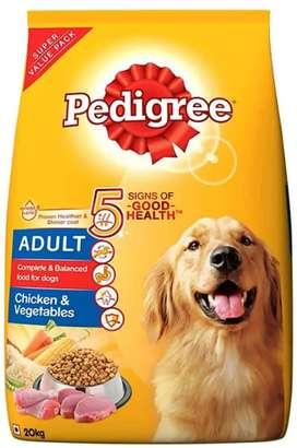 Pedigree adult puppy