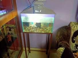 Fish and aquarium and stand
