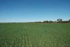 Village Saidpura-14 Acre agricultural land, On road