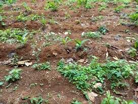 Disewakan lahan per hektar cocok untuk pertanian