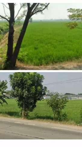 Dijual tanah/sawah Di jalan Kota Karawang