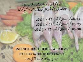 Batair/Quail Packed Meat At Large Quantity