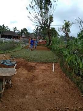 Tukang taman/pembuatan kolam hias