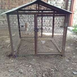 Aseel cage