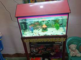 Aquarium for shell