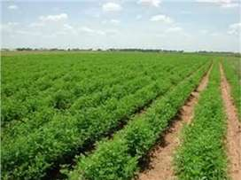 Rent of Land for agriculture