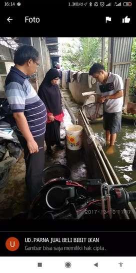 Loker medan jaga bibit ikan
