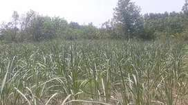 2 Kanal Agricultural Land available for Sale