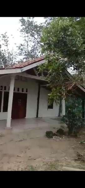 Dijual kebun pete luas 4000 m2 sudah ada rumah
