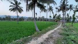 Farmland for sale belur chekkadipatti village near vazhapadi salem