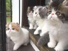 All types  kittens and cats