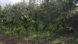 Agriculture Land with House at Dindukombu, Maraiyoor, Idukki District