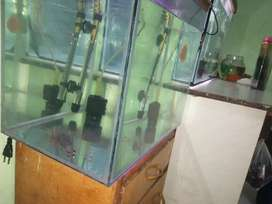 Fish tank for home