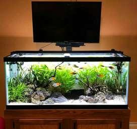 Aquascape natural plant tank,manali himachal pardesh
