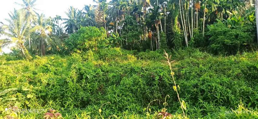 Jual tanah bekas kilang padi