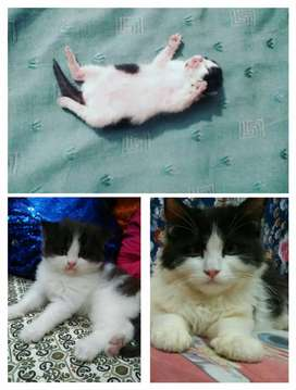 3 months old kittens for sale