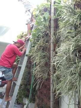 Jual tanaman hias & rumput langsung pasang