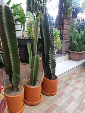 Pot gerabah tanaman