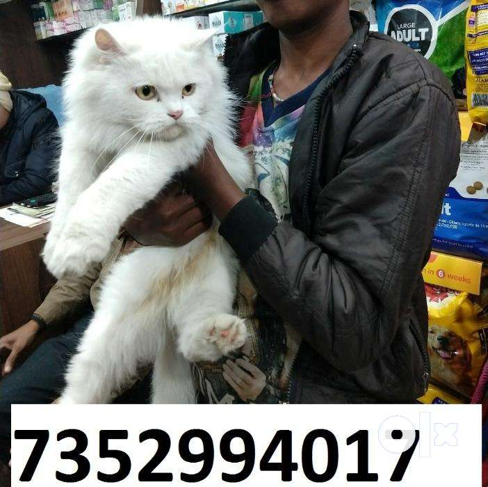 cat's kitty in bihar at raj pet 0