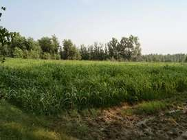 15 Bigha Agriculture Land For Sale