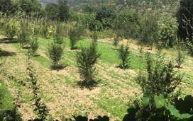 Farm Land For Sale in Bhopal, Sehore District. Only 20 km from Bhopal.
