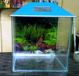 Aquarium Fish Tank [12x9x12] [NEW]