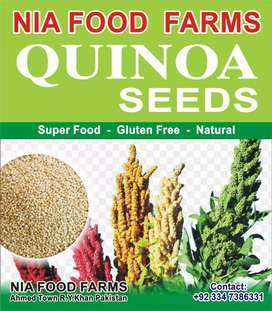 Quinoa seeds (A superfood in 21st century)