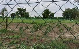 Greenish agricultural farm land
