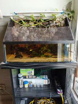 Paludarium complete running setup with variety of expensive fish