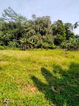 Di jual Cepat Sawah Kebun milikPribadi Dekat kampung wisata Cinangneng