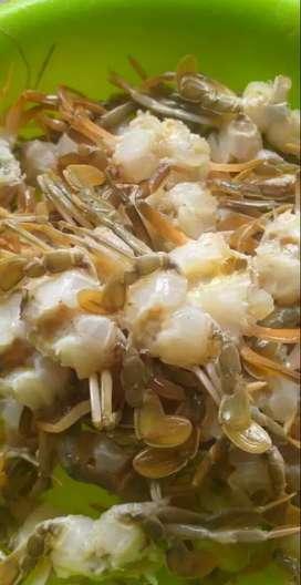 BABY CRAB anak kepiting Lepas Cangkang