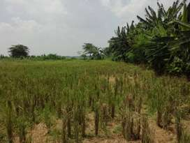 Tanah Strategis Bangun Perumahan Dekat Jalan Pantura Dan Zona Industri