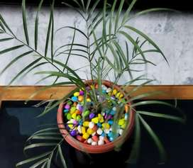 Small beautiful plant