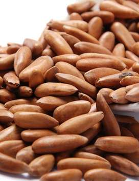 pine nuts   chilghoza for sale