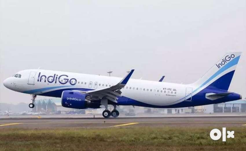 Job requirement in indigo airline ground staff 0