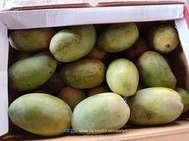 Satadhar mango farm