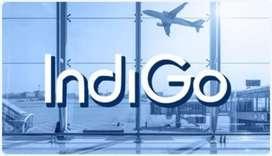 New vacancies opens in indigo airlines