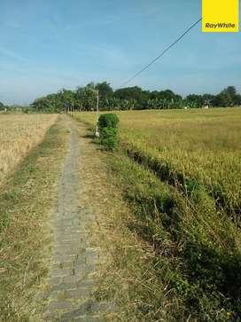 Dijual Tanah Sawah Di Jl. Bogowonto, Mejayan, Caruban, Madiun