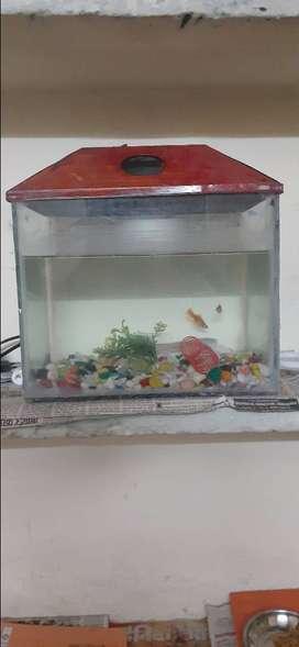 Aquarium good conditions