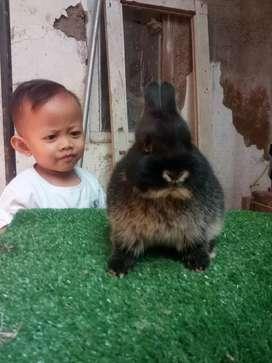 Kelinci imut lucu mini ND kelinci kecil