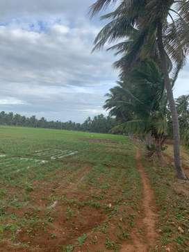Agricultural land/agriculture land/coconut farm/farm land/farm house