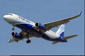 Huge vacancy, open INDIGO Airlines ,Airport Greeting from Indigo Airli