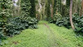 25 Acres of Coffee and areca nut plantation for sale in Sakleshpur