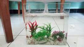 Aquarium Cupang Bukan Kaca