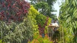Tukang taman vertical garden di serang