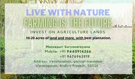 Best agricultural lands with better plantations