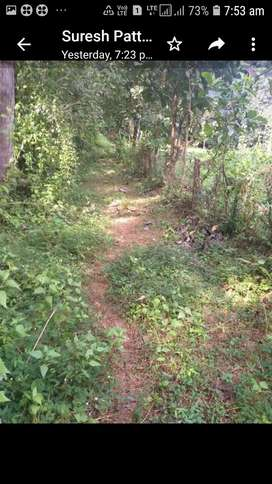 Ottapalam Manisery Near Allied management College 23 Cent Plot Sale